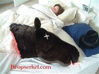 Mysig kudde: dött hästhuvud